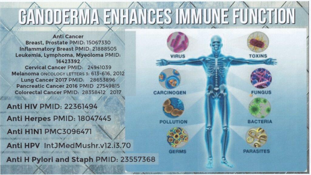 immune-function-1024x576