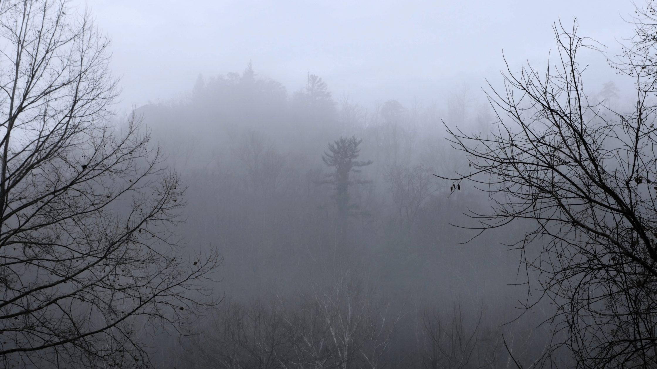Fog overshadowing gray skies